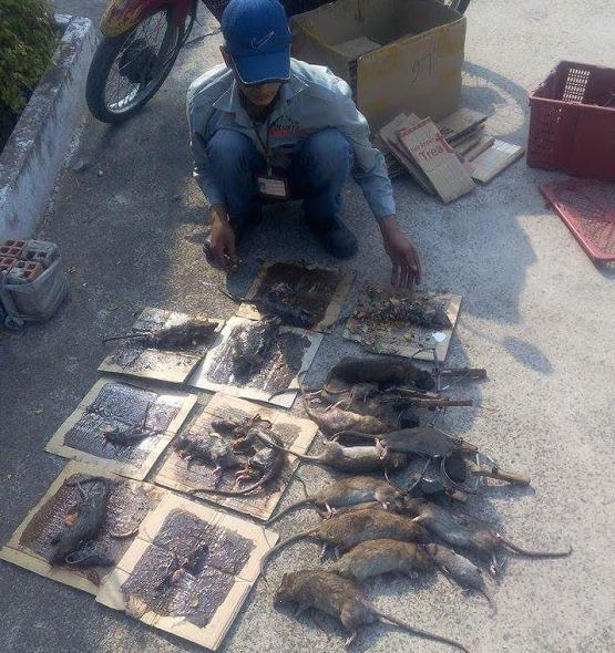 Công ty diệt chuột Đà Nẵng