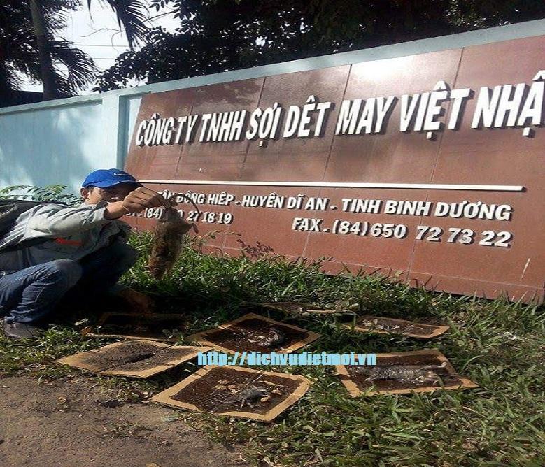 Diệt chuột tại Điện Biên