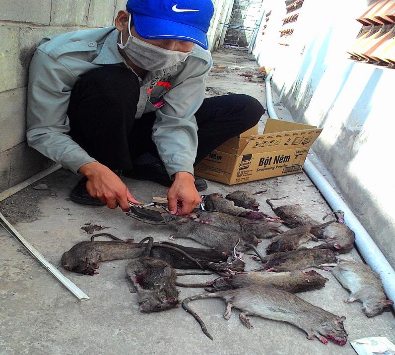 Diệt chuột Gia Lai