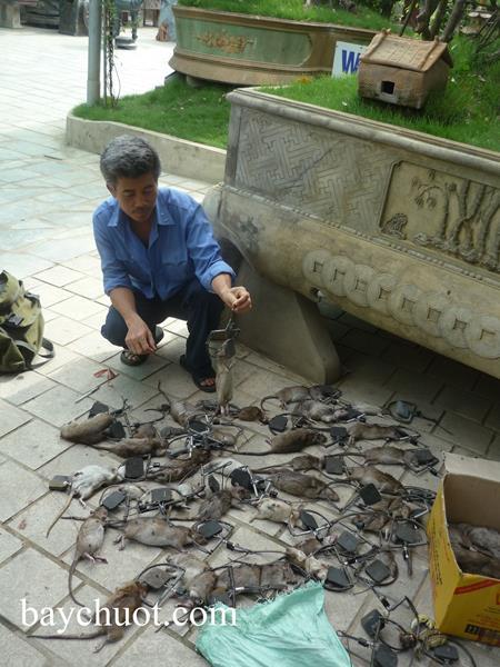 Dịch vụ diệt chuột tại Bình Định