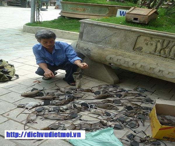 Dich-vu-diet-chuot-tai-Thanh-Hoa