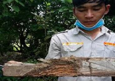 Diệt mối tận gốc tại Hà Giang
