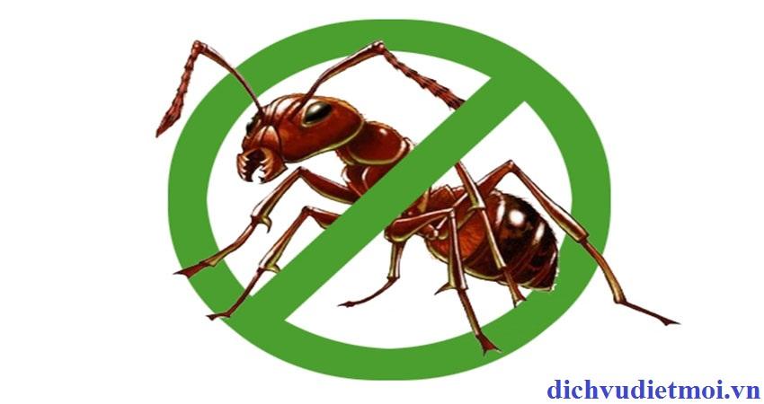 diệt kiến tại Đà Nẵng