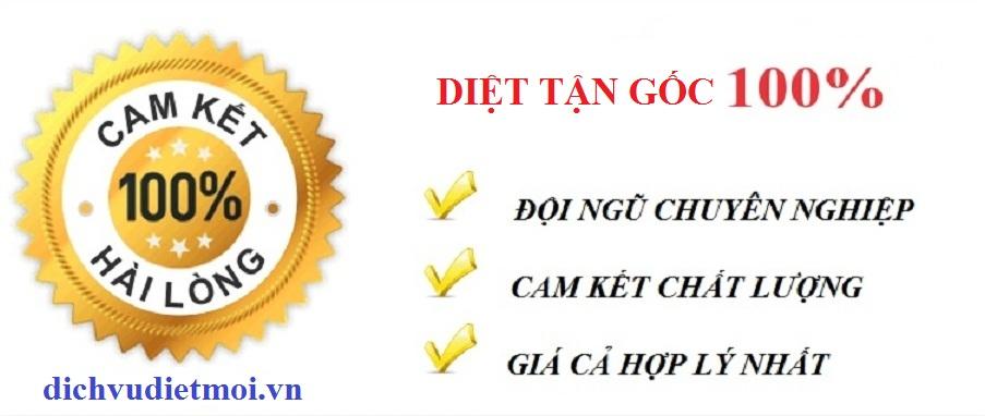 Dịch vụ diệt kiến tại Hà Nội