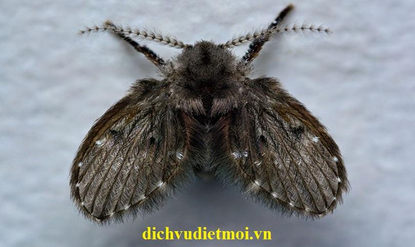 diệt ruồi tại Hà Nội