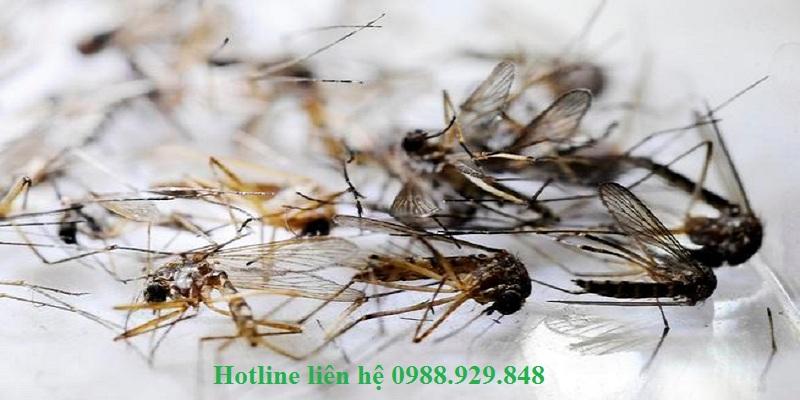 Đơn vị phun diệt muỗi quận Long Biên