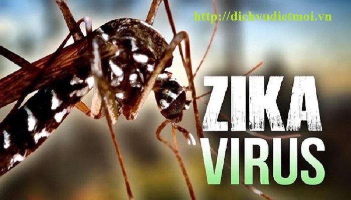 Dịch vụ diệt muỗi tại Chương Mỹ