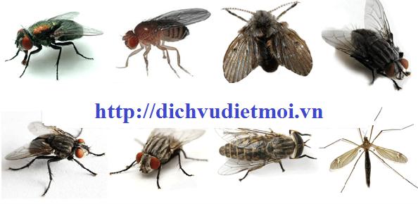 Dịch vụ diệt ruồi tại tphcm
