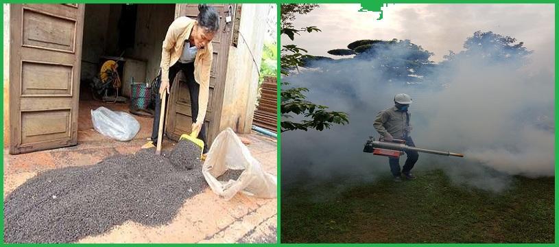 Dịch vụ diệt bọ đậu đen hiệu quả nhất