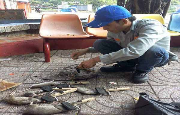 hợp đồng diệt côn trùng tại Tp Hồ Chí Minh