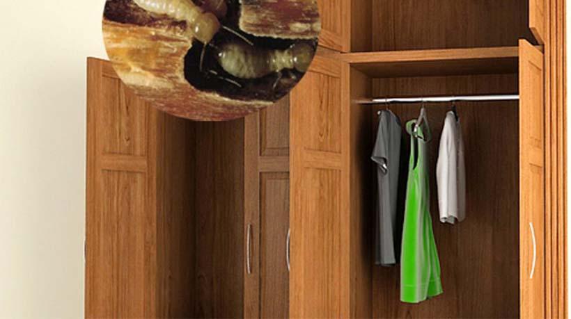 diệt mối mọt tủ quần áo gỗ