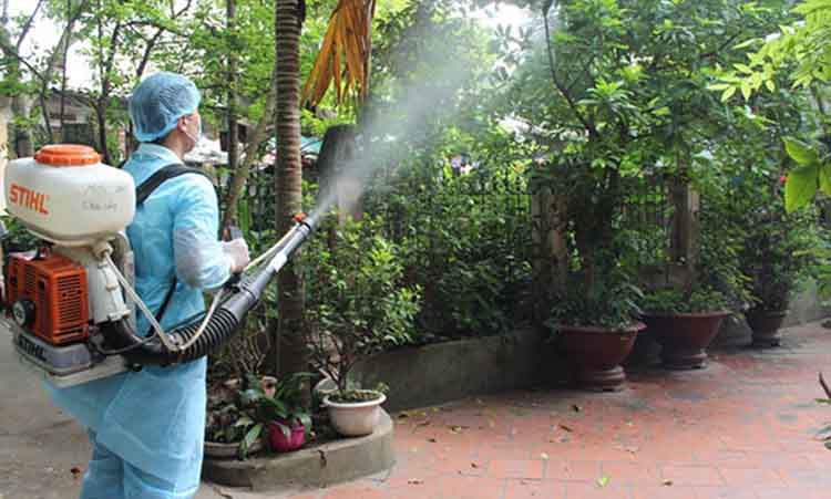 dịch vụ diệt sâu róm tại Hà Nội