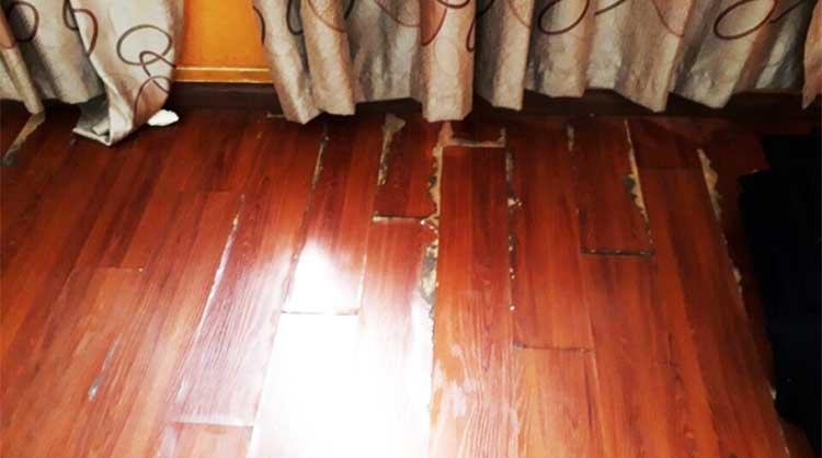 Cách phòng chống mối mọt cho sàn gỗ