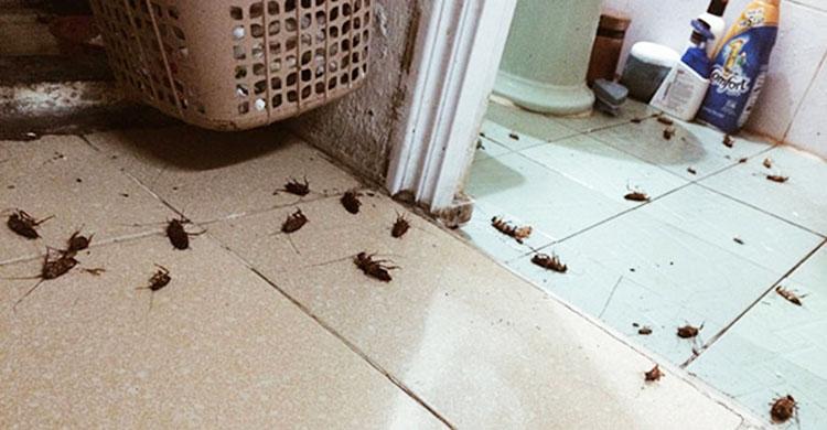 Báo giá diệt côn trùng tại Quảng Ninh