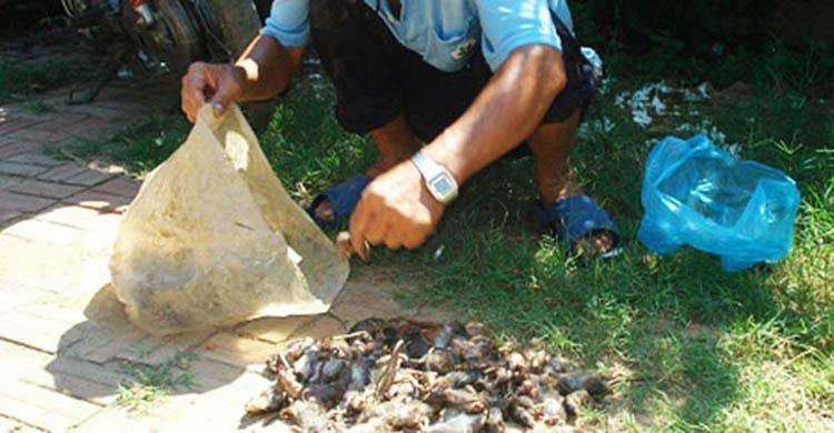 báo giá diệt côn trùng tại Bắc Ninh