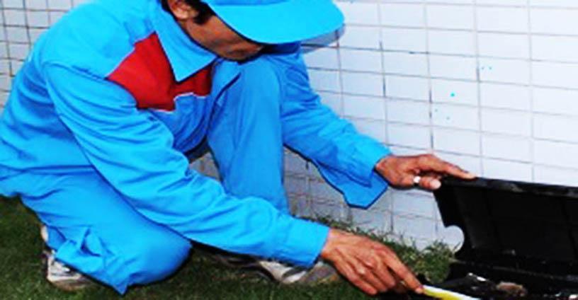 hợp đồng diệt côn trùng tại Bắc Giang