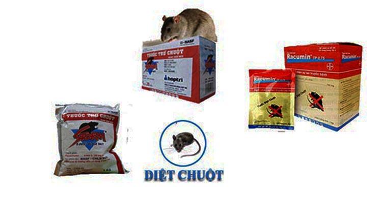 diệt chuột tại Tp Hồ Chí Minh