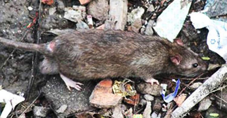 Dịch vụ diệt chuột tại Sóc Trăng