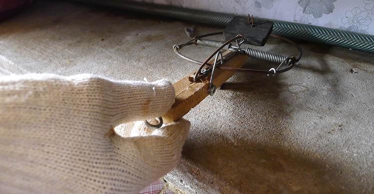 diệt chuột tại Long An