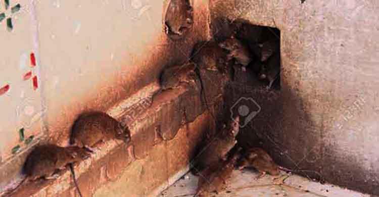 diệt chuột tại Đồng Nai