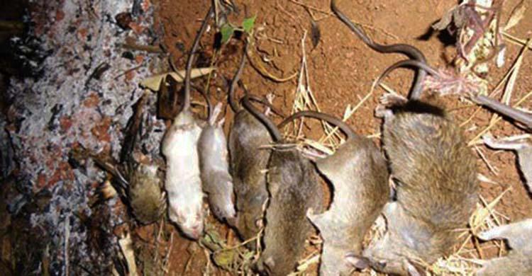 diệt chuột tại Vũng Tàu