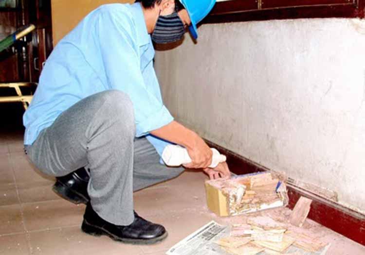 báo giá diệt côn trùng tại Thành phố HCM