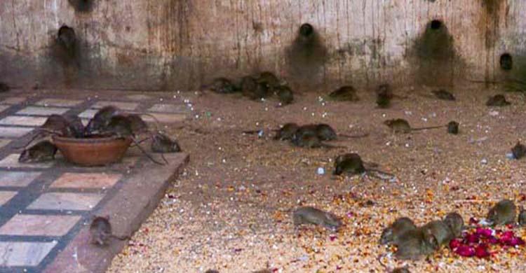 diệt chuột tại Trà Vinh
