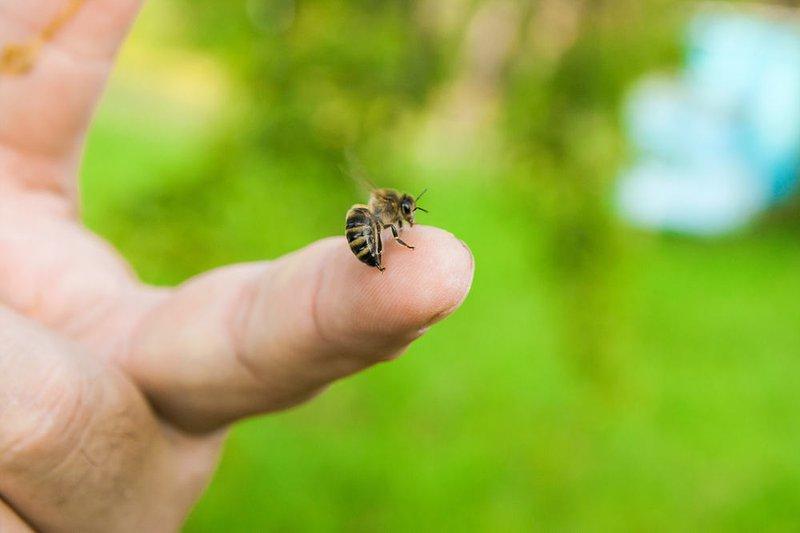 cách xử lý khi bị ong đốt