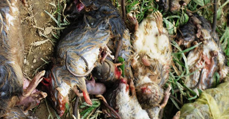 diệt chuột tại Bạc Liêu