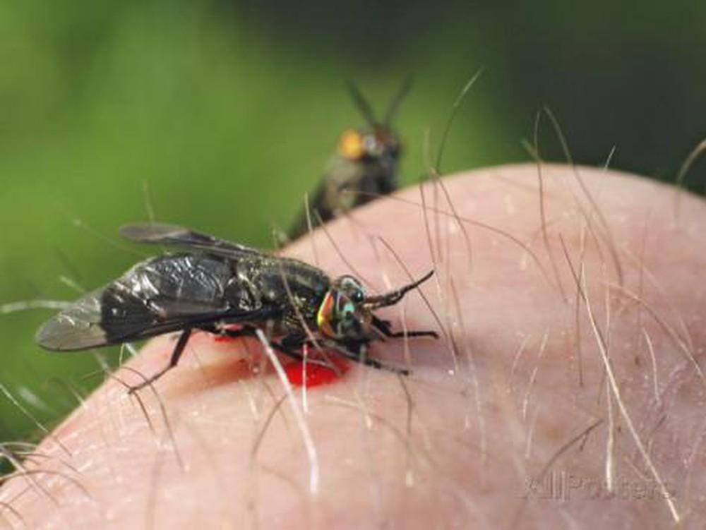 top 5 loài côn trùng nguy hại nhất