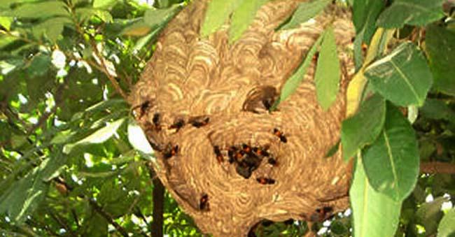 dịch vụ bắt tổ ong tại Đà Nẵng