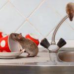 Làm sao để chuột không vào nhà