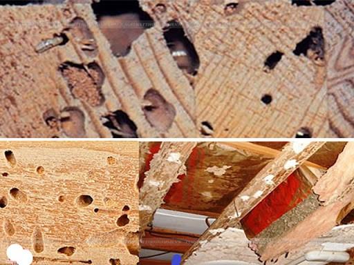 diệt mối cho xưởng gỗ