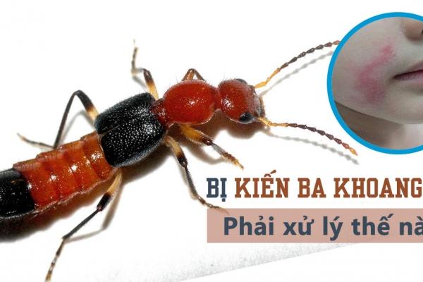 Những điều thú vị về loài kiến