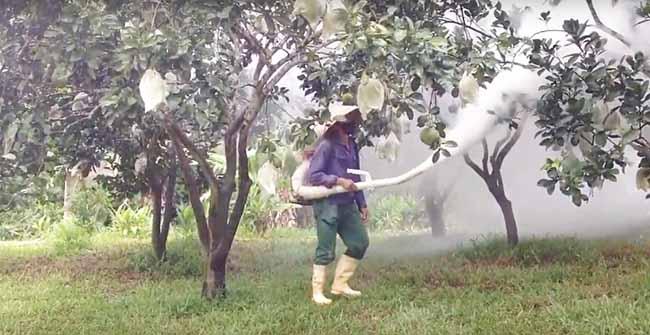 Diệt nhện đỏ cho cây ăn quả