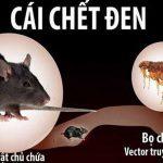 Kí sinh trùng trên chuột